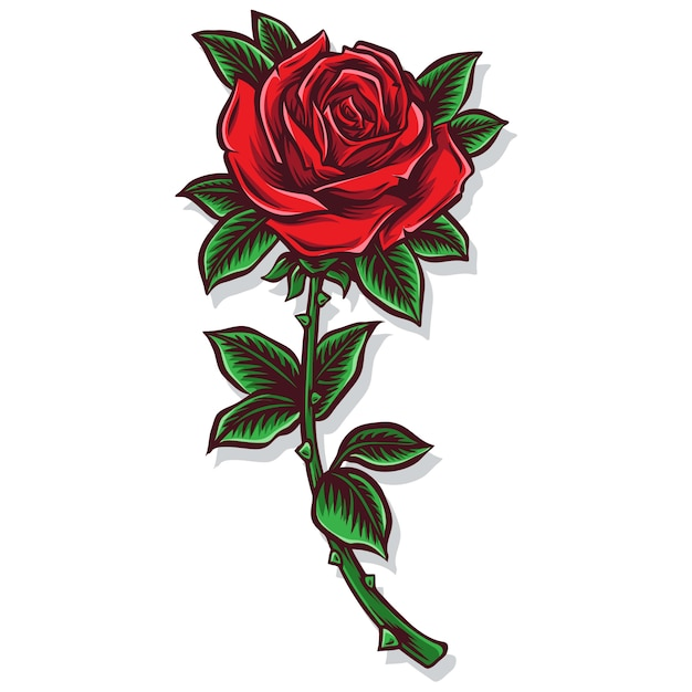Róża łodyga Wektor I Ilustracja Premium Wektorów