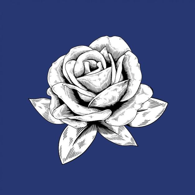 Różana rysunkowa kwiat natury wektorowa ikona na błękitnym tle Darmowych Wektorów