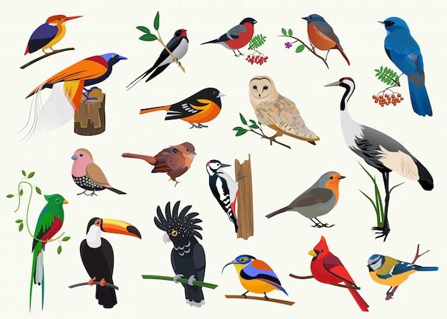 Różne Kolekcje Ptaków Z Kreskówek Dla Dowolnego Projektu Wizualnego. Premium Wektorów