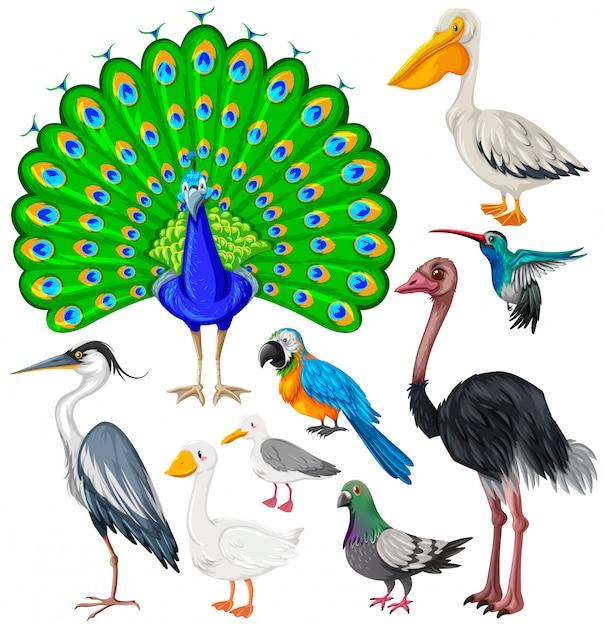 Różne Rodzaje Dzikich Ptaków Premium Wektorów