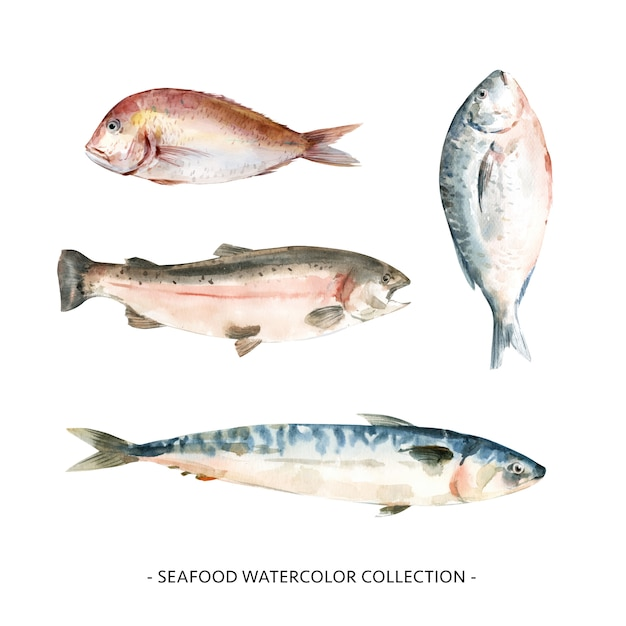 Różnorodna Odosobniona Akwarela Owoce Morza Ilustracja. Darmowych Wektorów