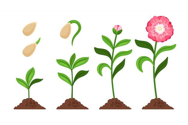 Różowe Ikony Wzrostu I Rozkwitu Kwiatów Premium Wektorów