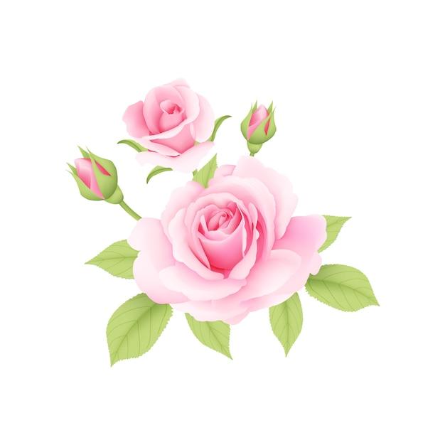 Różowe róże bouqet wektor Premium Wektorów