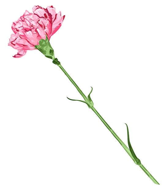 Różowy Goździka Kwiat Odizolowywający Premium Wektorów