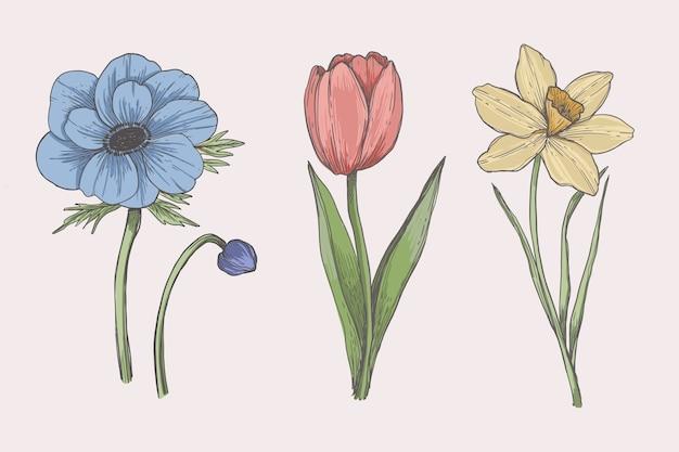 Rysunek z kolekcji kwiatów botaniki vintage Darmowych Wektorów