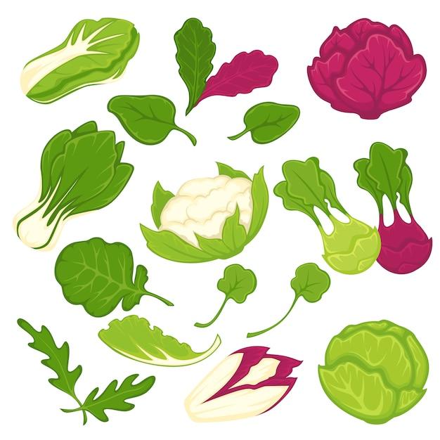 Sałaty sałatkowe liściaste warzywa wektor zestaw ikon na białym tle Premium Wektorów