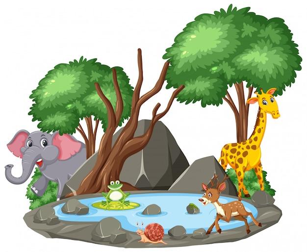 Scena Dzikich Zwierząt I Stawu Premium Wektorów