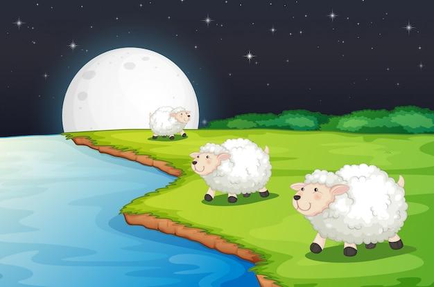 Scena Farmy Z Uroczymi Owcami I Rzeką W Nocy Darmowych Wektorów