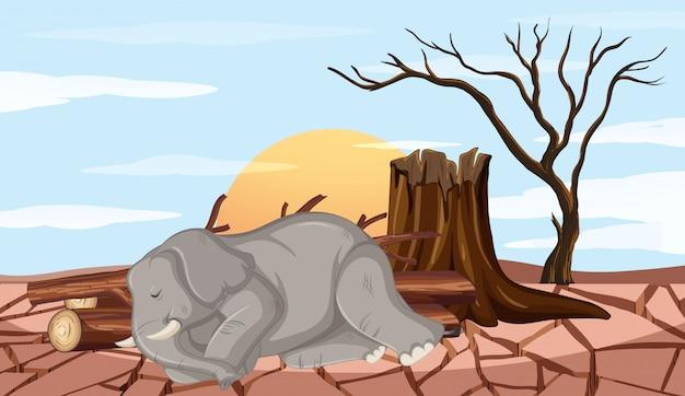 Scena Wylesiania Z Słoniem I Suszą Darmowych Wektorów