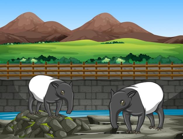 Scena z dwoma tapirami w zoo Darmowych Wektorów