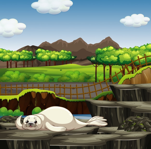 Scena z foką w zoo Darmowych Wektorów