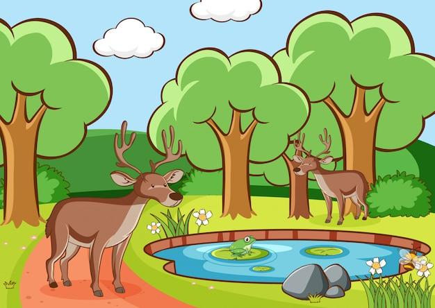 Scena z jeleniami w lesie Darmowych Wektorów