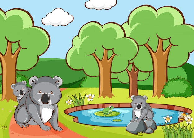 Scena z koalą w parku Darmowych Wektorów