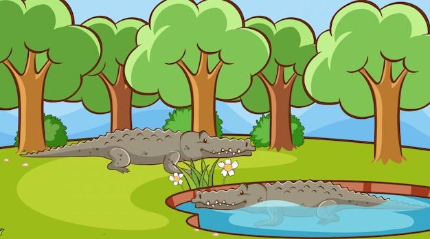 Scena Z Krokodylami W Parku Darmowych Wektorów