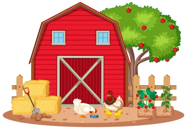 Scena Z Kurczakami I Warzywami W Gospodarstwie Darmowych Wektorów
