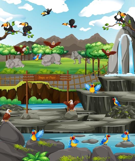 Scena Z Ptakami W Zoo Premium Wektorów