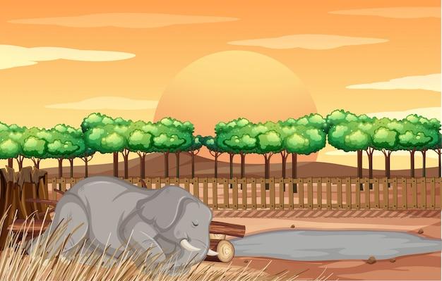 Scena Z Słoniem W Zoo Darmowych Wektorów