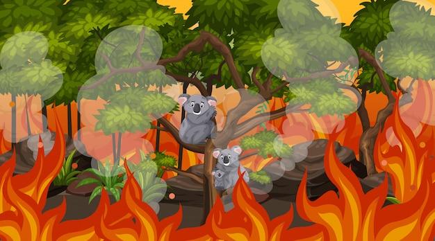 Scena Z Wielkim Pożarem I Koalami Uwięzionymi W Lesie Premium Wektorów