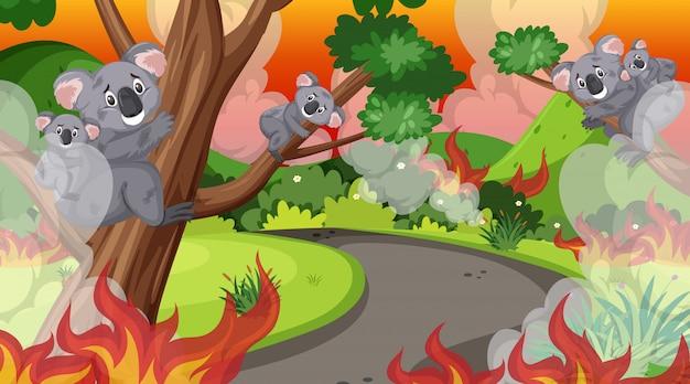 Scena Z Wielkim Pożarem W Lesie I Wieloma Rannymi Koalami Premium Wektorów