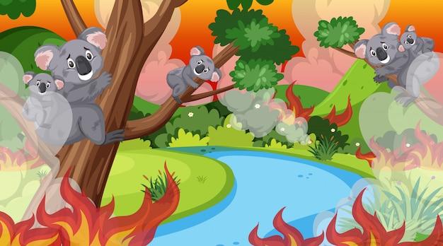 Scena Z Wielkim Pożarem W Lesie Pełnym Koali Premium Wektorów