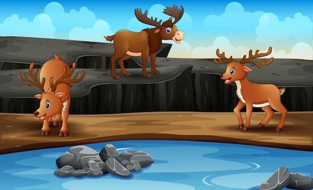 Scena Z Wieloma Rogaczami W Otwartym Zoo Premium Wektorów