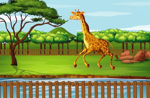 Scena z żyrafą przy zoo Darmowych Wektorów
