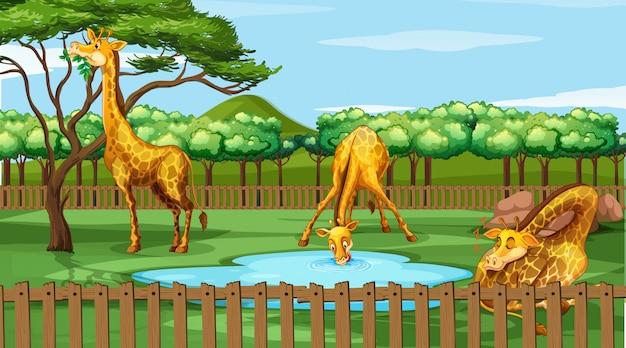Scena Z żyrafami W Zoo Darmowych Wektorów