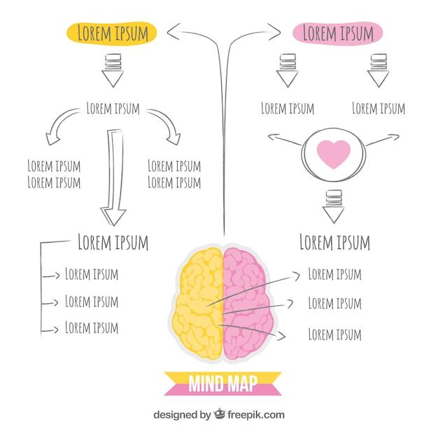 Schemat Mózgu Wyciągnięty Ręcznie Darmowych Wektorów