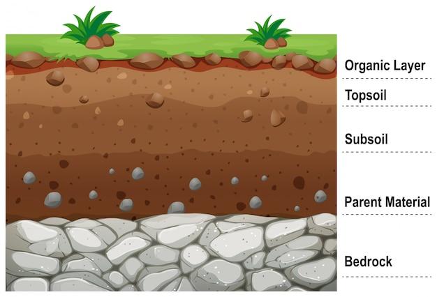 Schemat Przedstawiający Różne Warstwy Gleby Darmowych Wektorów