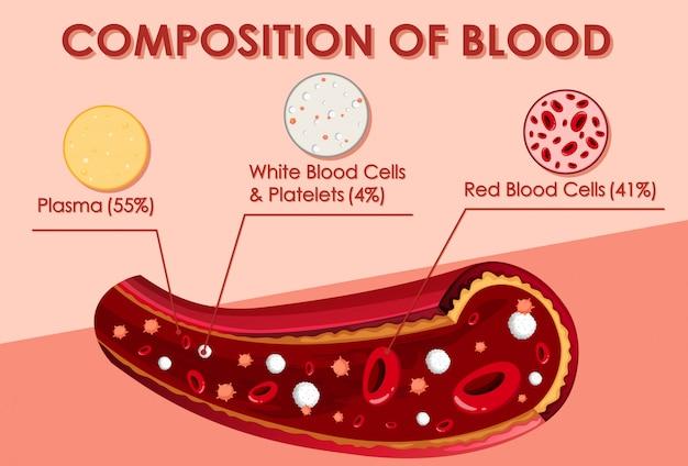 Schemat przedstawiający skład krwi Darmowych Wektorów