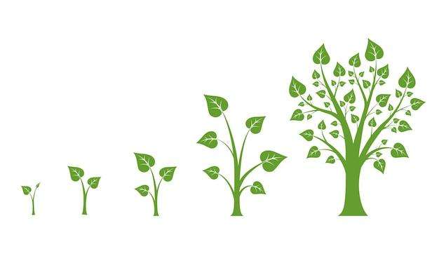 Schemat Wektora Wzrostu Drzewa. Wzrost Zielonego Drzewa, Wzrost Liści Przyrody, Ilustracja Wzrostu Roślin Darmowych Wektorów