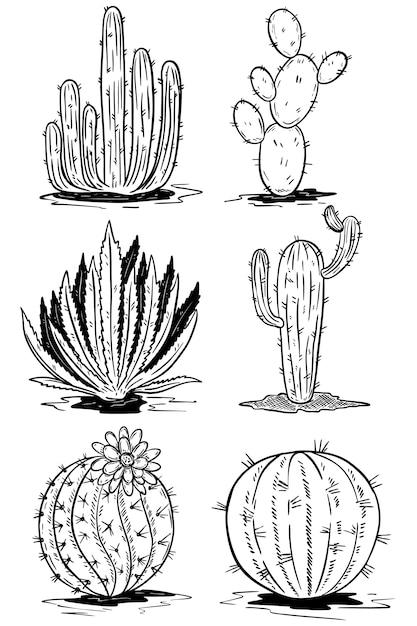 Set Kaktusowe Ilustracje Na Białym Tle. Ilustracje Premium Wektorów