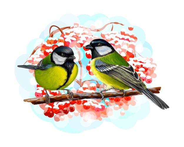 Sikora Ptaków Siedzących Na Gałęzi Na Białym Tle, Ręcznie Rysowane Szkic. Ilustracja Farb Premium Wektorów