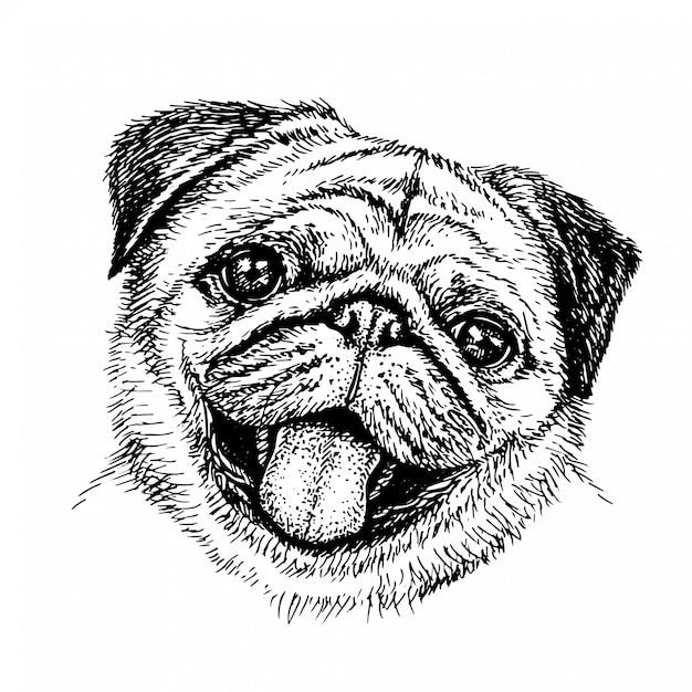Sketch Dog. Słodki Mops Portret Psa W Stylu Szkicu. Ręcznie Rysowane Tuszem Ilustracja. Premium Wektorów