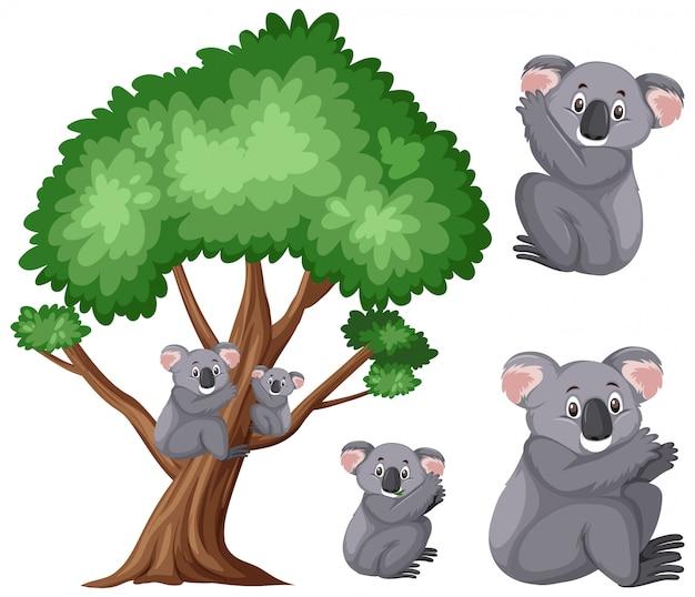 Śliczne Koale Na Dużym Drzewie Na Bielu Premium Wektorów
