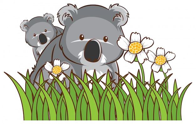 Śliczne Koale W Ogrodzie Darmowych Wektorów