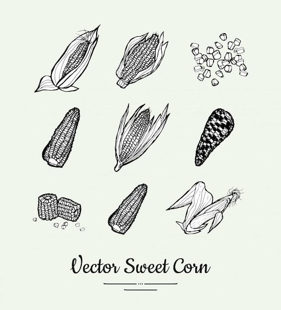 Słodka kukurydza, kukurydza, kukurydza na białym tle wektor zestaw produktów spożywczych Premium Wektorów