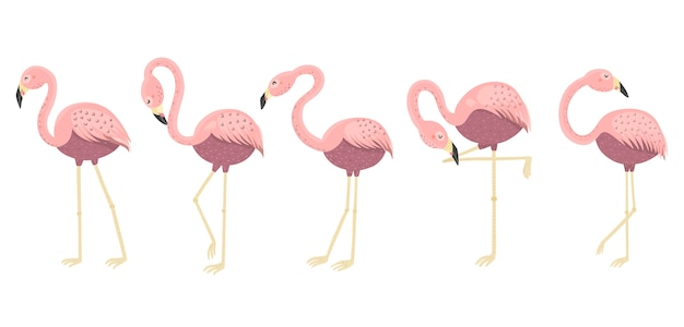 Śmieszne flamingi w różnych pozach. pojedyncze elementy Premium Wektorów