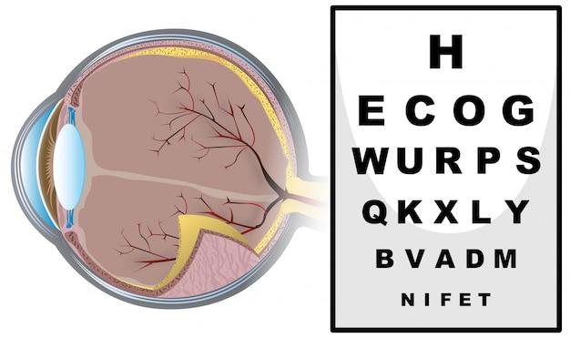 Sprawdzanie wzroku z tablicą do czytania Premium Wektorów