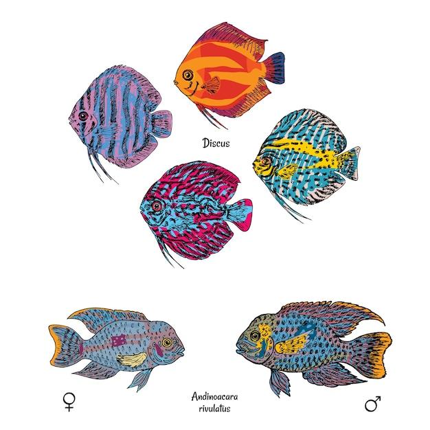 Świetne Ryby Akwariowe Ustawione W Kolorowym Stylu Rysowania Na Białym Tle Darmowych Wektorów