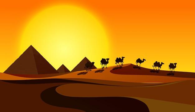 Sylwetka Wielbłądy W Pustynnej Scenie Premium Wektorów
