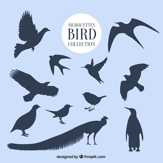 Sylwetki kolekcję ptaków Darmowych Wektorów