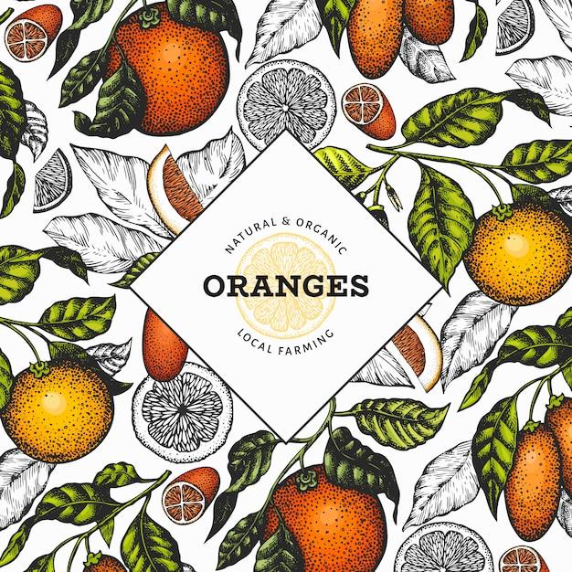 Szablon Owoców Cytrusowych. Ręcznie Rysowane Wektor Ilustracja Kolor Owoców Premium Wektorów