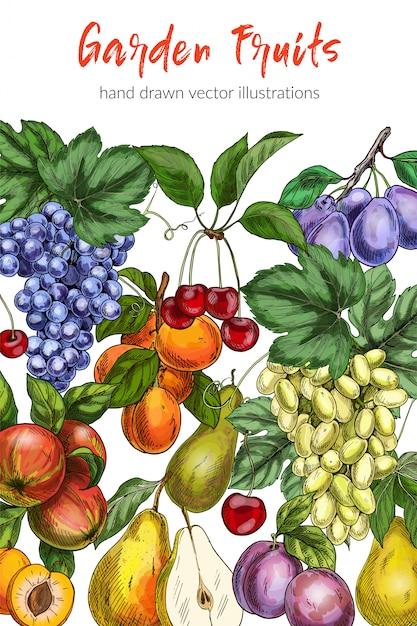 Szablon Plakat Owoce Premium Wektorów