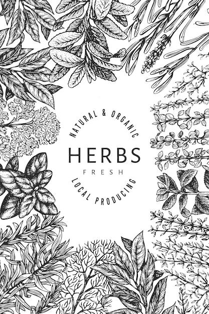 Szablon Transparent Zioła Kulinarne. Ręcznie Rysowane Vintage Ilustracji Botanicznych. Grawerowany Styl. Tło Vintage żywności. Premium Wektorów
