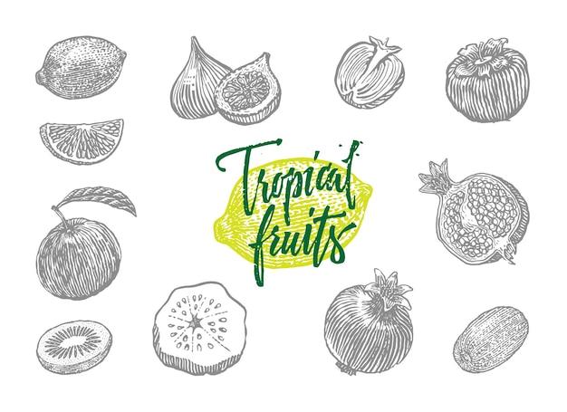 Szare Na Białym Tle Wygrawerowane Różne Owoce Tropikalne Ustawione W Stylu Rysowania Darmowych Wektorów