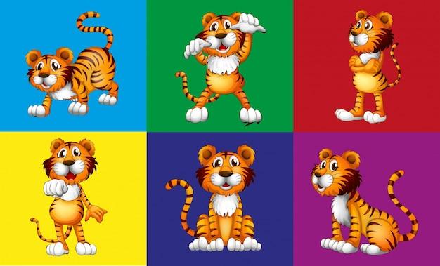 Sześć różnych pozycji ładnego tygrysa Darmowych Wektorów