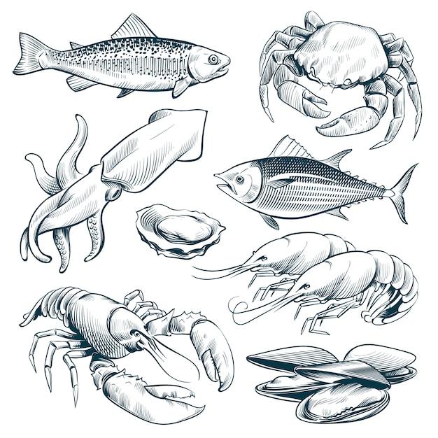 Szkic Owoce Morza. Krewetki Homary Skorupiaki. Ręcznie Rysowane Owoce Morza Posiłek Sztuka Wektor Zestaw Na Białym Tle Premium Wektorów