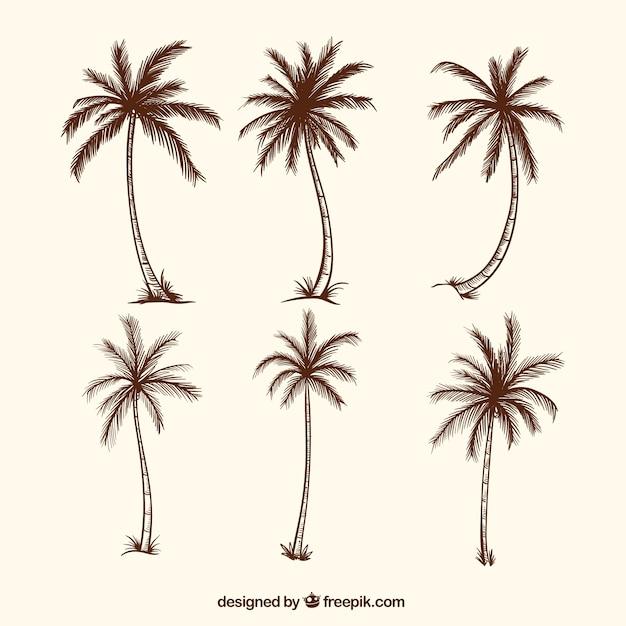 Szkice Drzew Palmowych Darmowych Wektorów