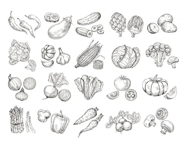 Szkicuj Warzywa. Kolekcja Warzyw Ogrodowych Wyciągnąć Rękę. Premium Wektorów